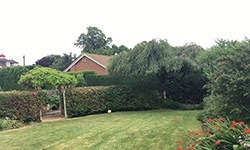 When to Trim my Hedge?