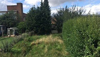 before hedge cutting